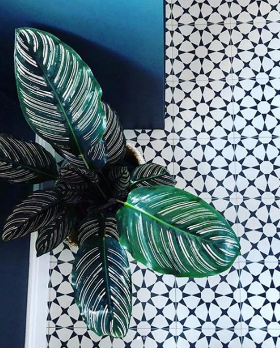 Pflanzen fürs Bad schöne Blattschmuckpflanze grüne Blätter weiß gestreift