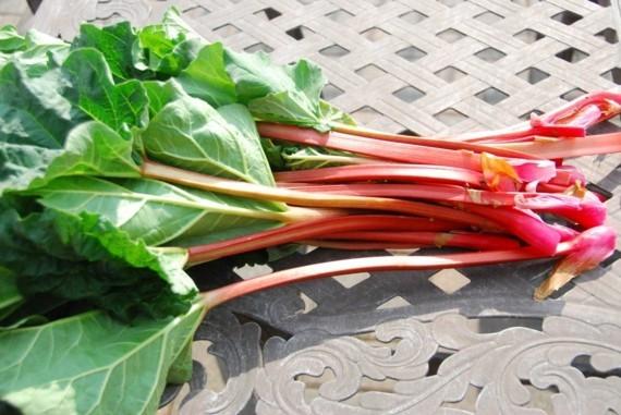 Rhabarber ernten wann ist die Pflanze erntereif Rhabarber Erntezeit