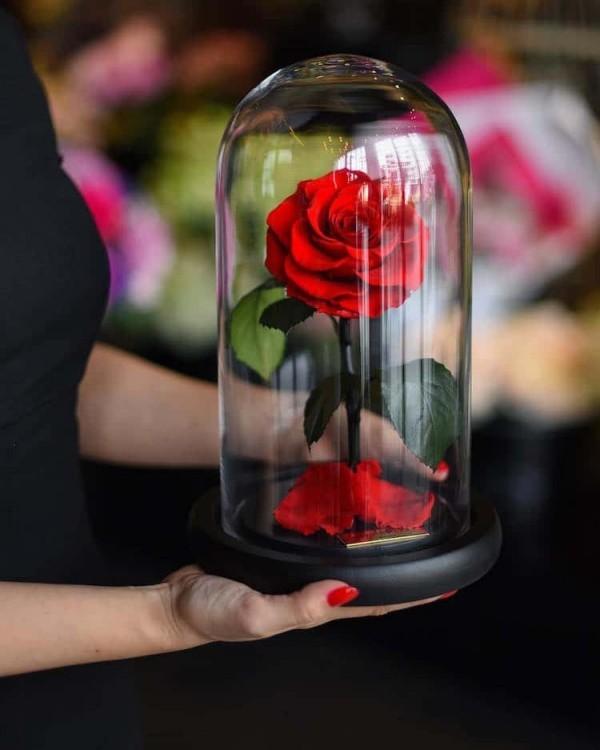 Rose im Glas das perfekte Geschenk viel Freude bereiten