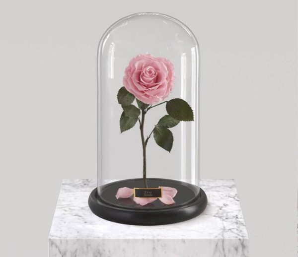 Rose im Glas in zartem Rosa steht für beginnende sich entwickelnde Liebe