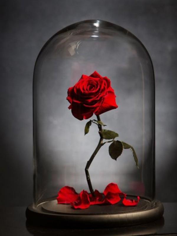 Rose im Glas pflegeleicht und sehr elegant
