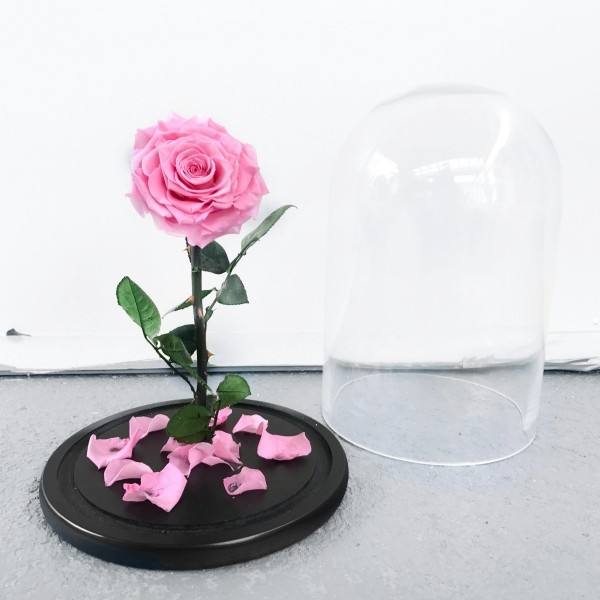 Rose im Glas rosafarben den Glasdeckel heben die Rose berühren