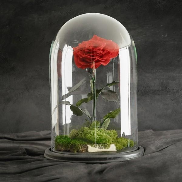 Rose im Glas rot vor schwarzem Hintergrund geheimnisvoll und mysteriös