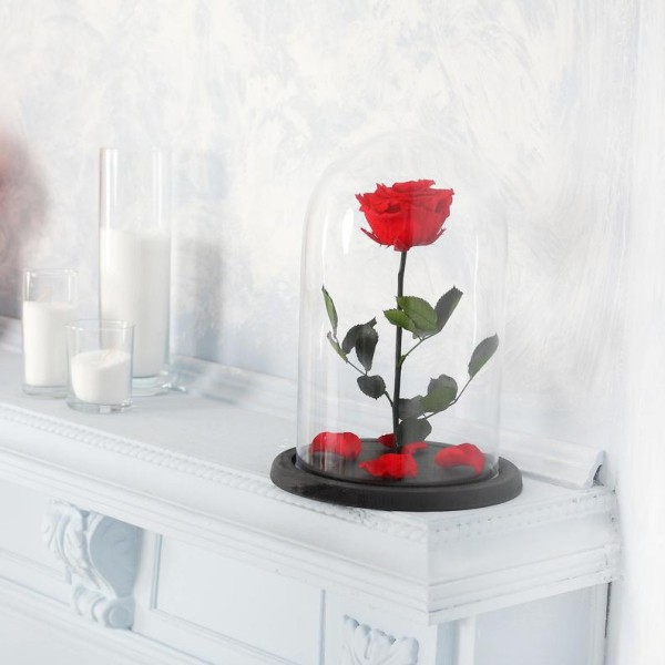 Rose im Glas rot vor weißem Hintergrund weiße Kerzen daneben