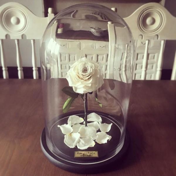 Rose im Glas weiß symbolisiert die Unschuld