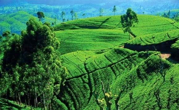 Sri Lanka Reisetipps Nuwara Eliya