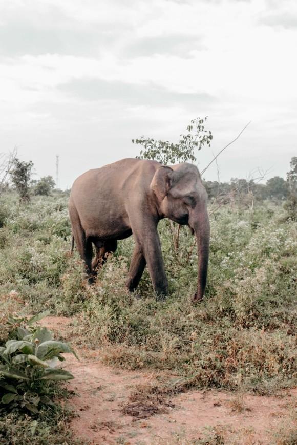Sri Lanka Reisetipps Udawalawe Nationalpark