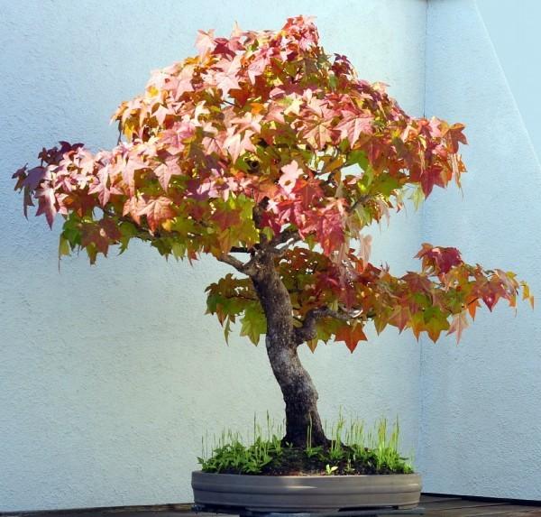 bunt farbene Blätter Baum