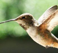 Aktuelles Projekt für Drohnen wird von den Eigenchaften des Kolibris inspiriert