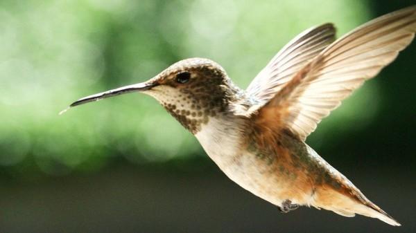 drohne kleines kolibri