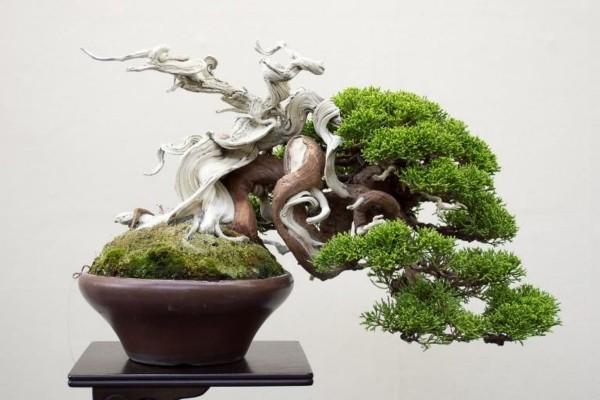 eine skultpur und Bonsai Baum
