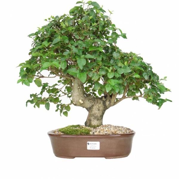 tolle Idee mit Bonsai Baum