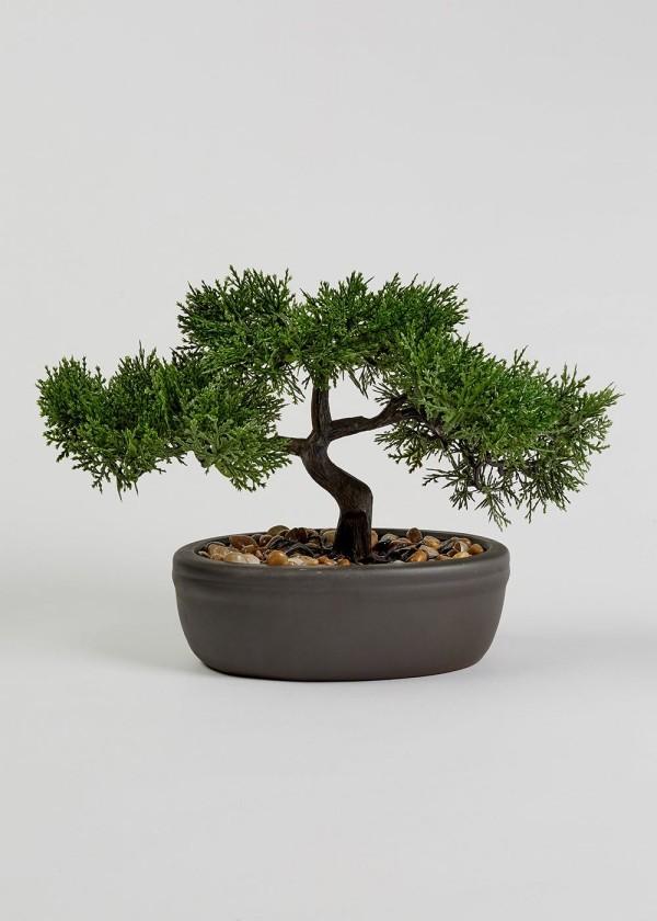 tolle nadeln - Bonsai Baum