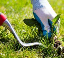 So hat Unkraut im Rasen gar keine Chance – wichtige Infos und praktische Tipps