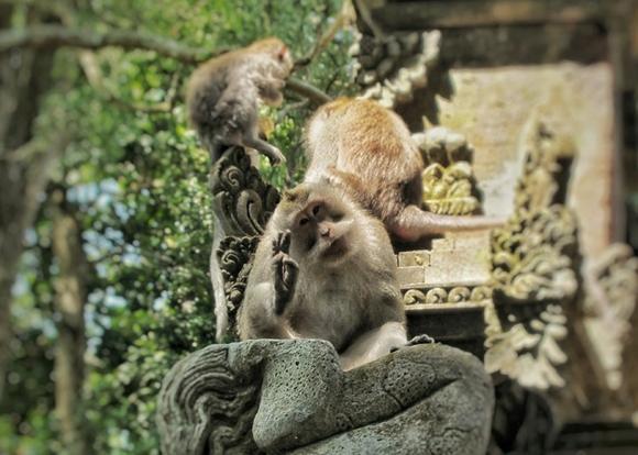 Bali Reisetipps Bali Packliste Affen
