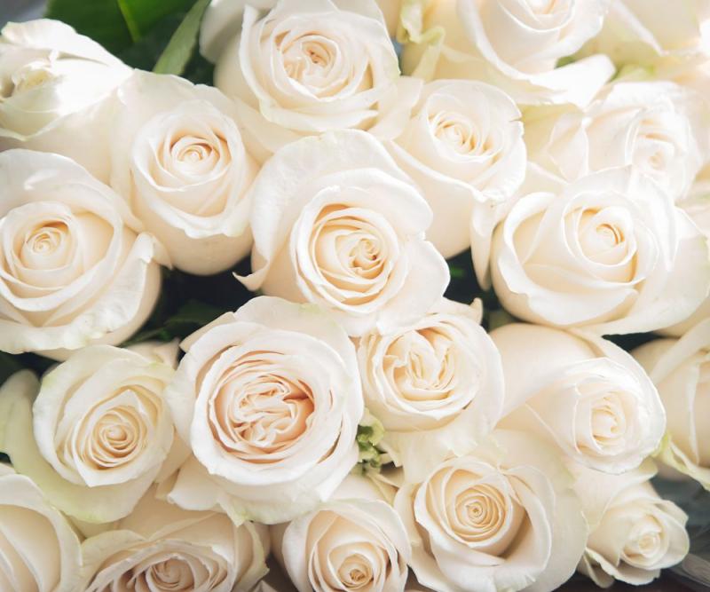 Blumensprache weiße Rosen Symbol für Unschuld und Treue