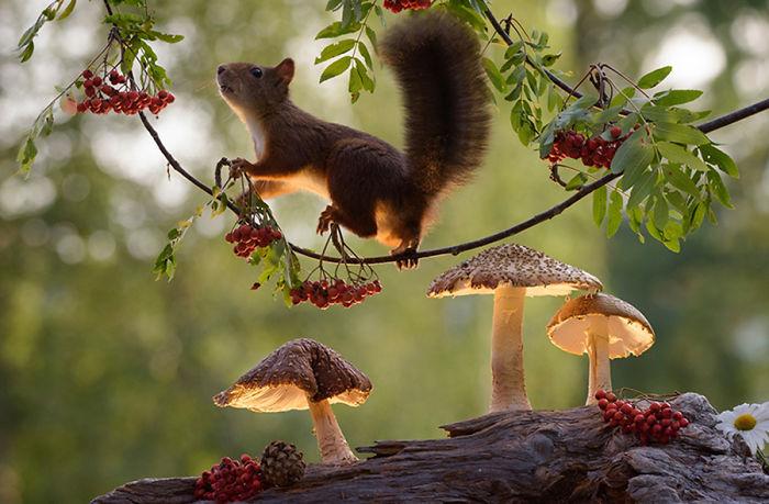 Eichhörnchen fotografieren Geert Weggen Nahrung suchen Überlebenstechnik der kleinen Nagetiere