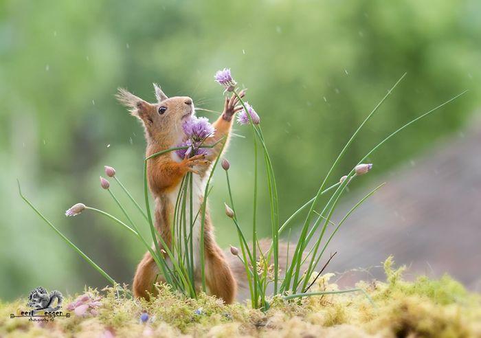 Eichhörnchen fotografieren Geert Weggen Samen suchen die Wildpflanzen bewundern