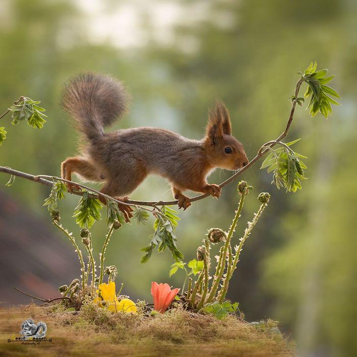 Eichhörnchen fotografieren Geert Weggen aus der Nähe aufnehmen gekonnt in Szene setzen
