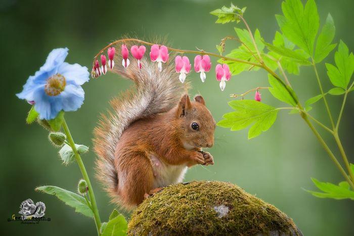 Eichhörnchen fotografieren Geert Weggen schöne Blumen Nuss gefunden Samen suchen