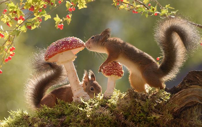 Eichhörnchen fotografieren Geert Weggen tolles Motiv für Momentaufnahmen zwei Nager Pilze Beeren