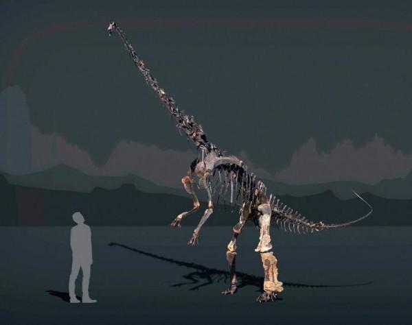 Einzigartiges Diplodocus Skelett mit Haut wird versteigert 6 meter hoch und 12 meter lang
