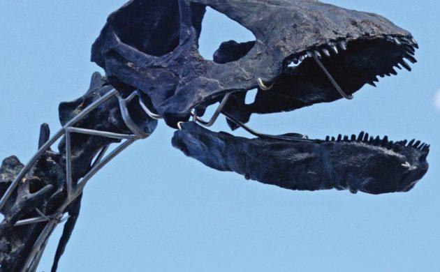 Einzigartiges Diplodokus Skelett mit Haut wird versteigert