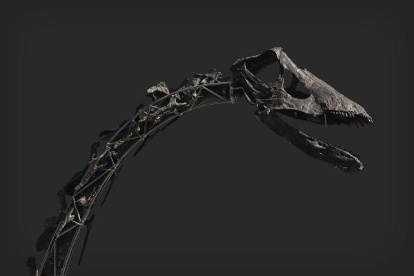 Einzigartiges Diplodocus Skelett mit Haut wird versteigert skinny hals und kopf schädel