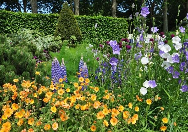 Gartengestaltung Blumen in Lila und Gelb