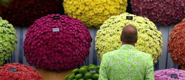 Gartengestaltung pflanzen in modernen farben