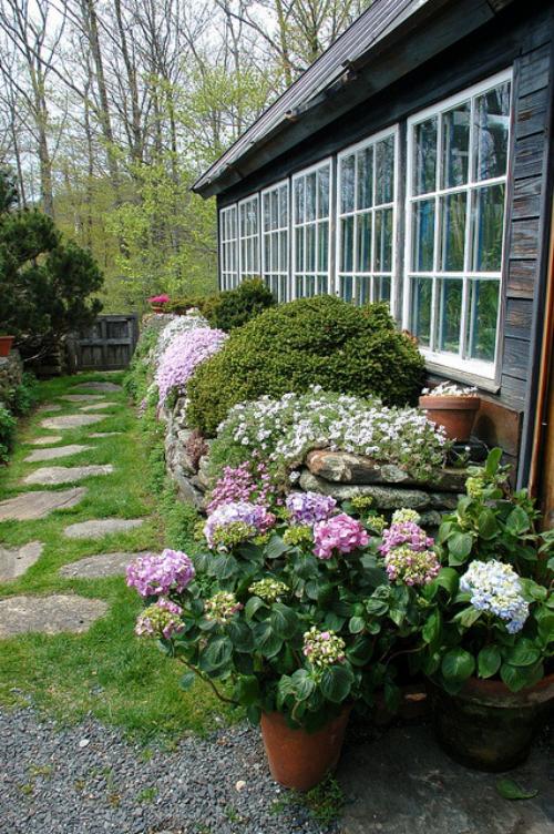 Gartenwege aus Stein Steinplatten mit Gras bewachsen Hortensien am Haus