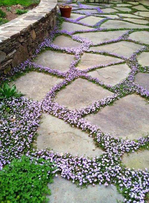 Gartenwege aus Stein großformatige Steinplatten mit dekorativem Pflanzenbewuchs