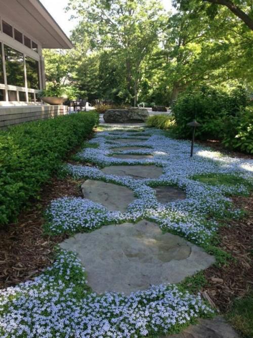 Gartenwege aus Stein kleinwüchsige Bodendecker zwischen großformatigen Steinplatten