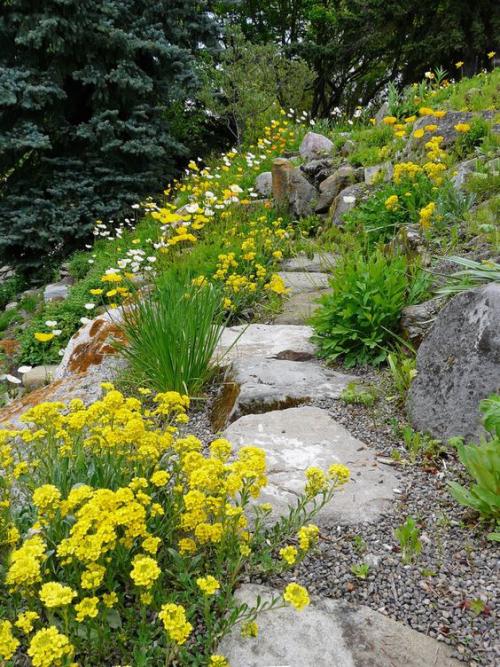 Gartenwege aus Stein natürlicher schöner Look Steine Wildpflanzen