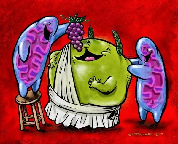 Granatapfel Wirkung bewiesen – Anti-Aging-Verbindung besteht Menschenversuch mitachondrien liefern energie