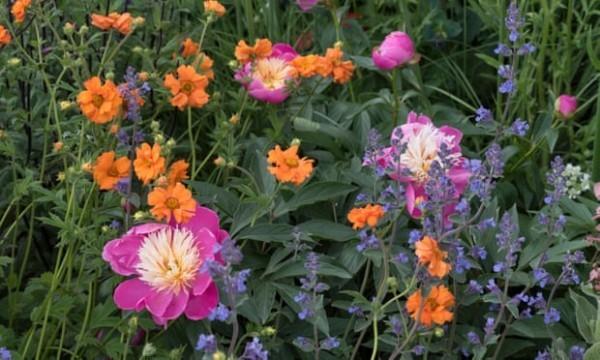 Jody Lidgard gartentrends in lila farbe