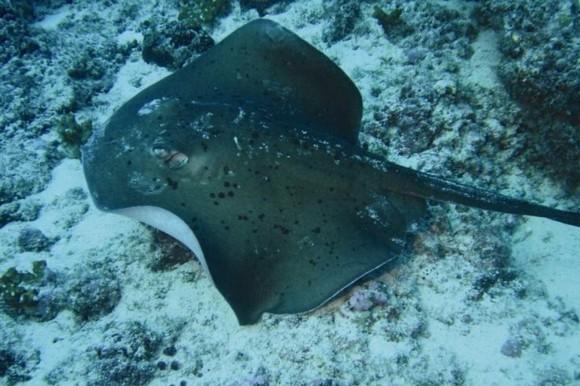 Kapverden Urlaub Kapverdische Inseln Schnorcheln Unterwasserleben