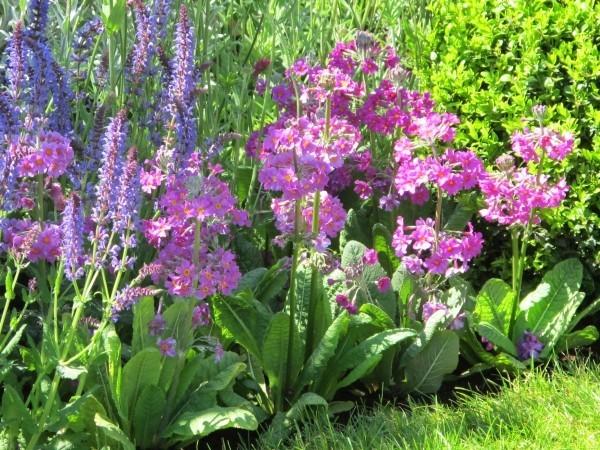 gartengestaltung tolle pflanzen in lila