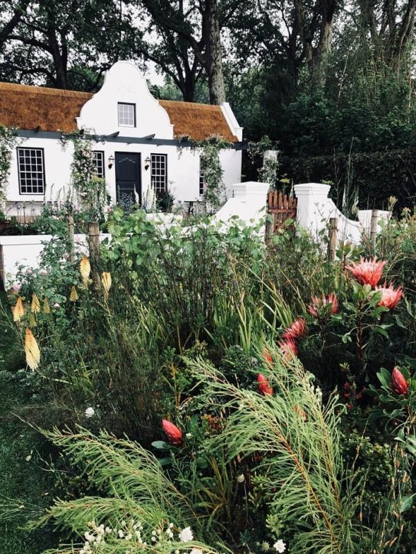 riesige gruene pflanzen Gartengestaltung