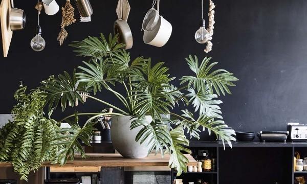 wohnideen mit pflanzen für die küchengestaltung