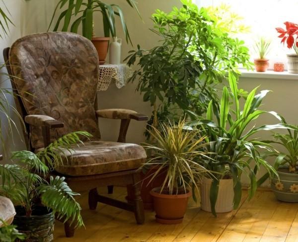 wohnideen tolle pflanzen mit einem sessel