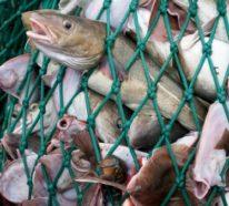 Fischloser Fisch von Impossible Foods in Entwicklung