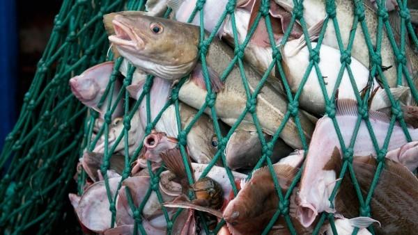 Fischloser Fisch von Impossible Foods in Entwicklung überfischung ist ein echtes problem