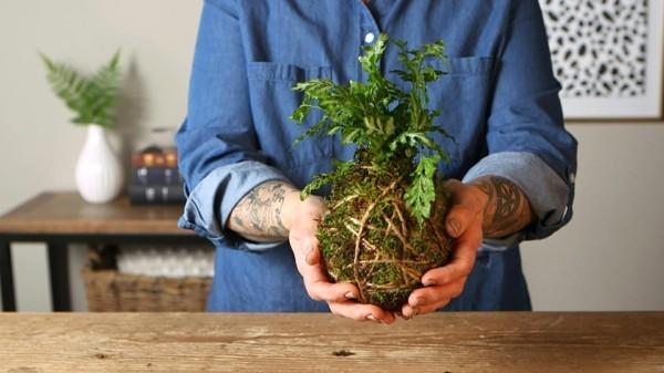 Kokedama selber machen Bastelideen Zimmerpflanzen pflegeleicht