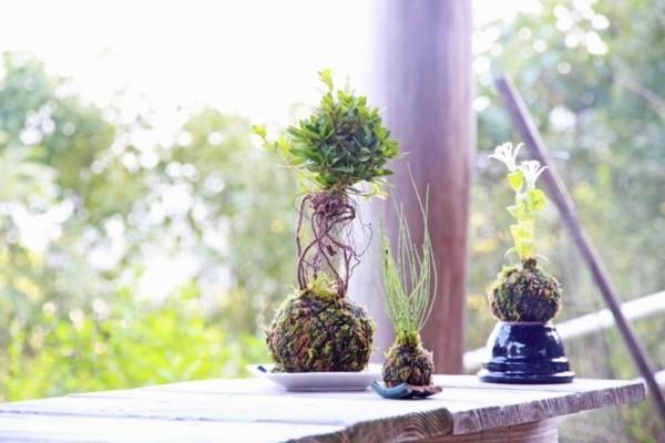 Kokedama selber machen Mooskugel Moosball Balkonpflanzen pflegeleicht