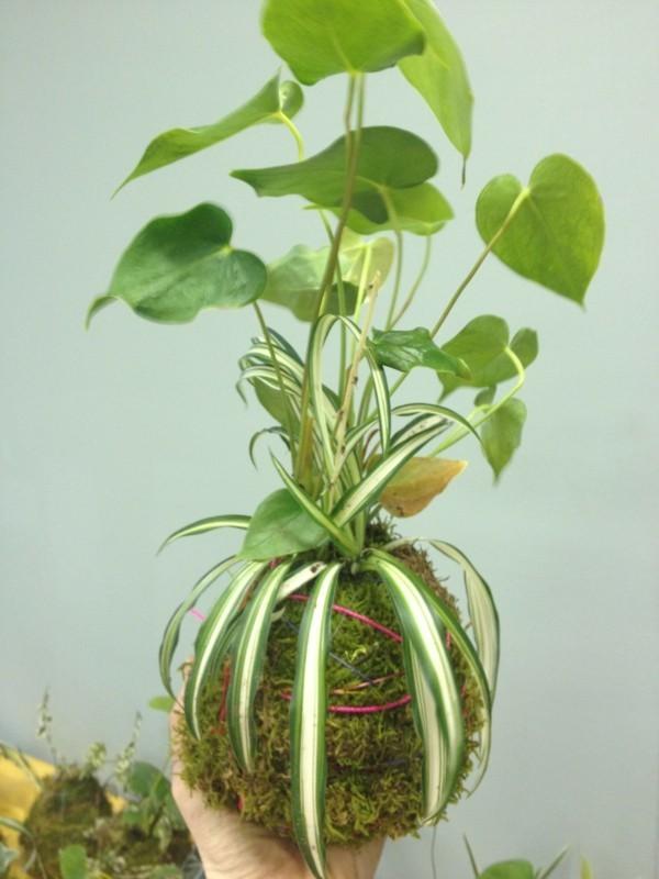 Kokedama selber machen Mooskugel Moosball Zimmerpflanzen pflegeleicht
