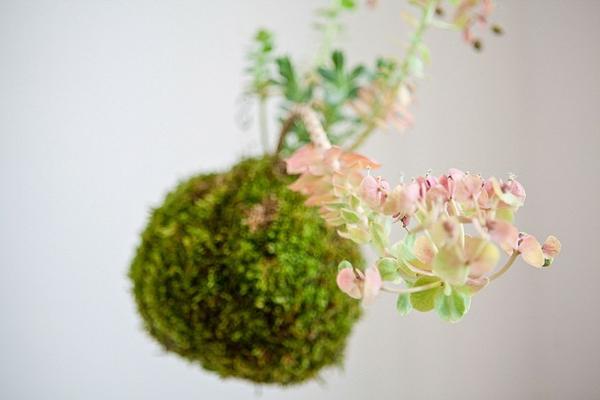 Kokedama selber machen Mooskugel hängende Zimmerpflanzen