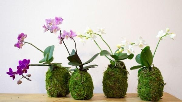 Kokedama selber machen Mooskugeln Zimmerpflanzen pflegeleicht