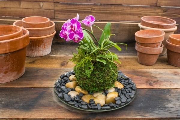 Kokedama selber machen japanische Gartenkunst Moos Deko Steine