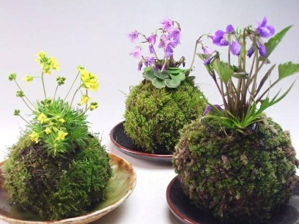 Kokedama selber machen japanische Gartenkunst Mooskugel